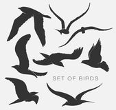 Set of silhouettes of birds. Set of illustration of silhouettes of birds Stock Image