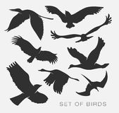 Set of silhouettes of birds. Set of illustration of silhouettes of birds Royalty Free Stock Image