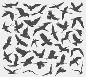 Set of silhouettes of birds. Set of illustration of silhouettes of birds Royalty Free Stock Photography
