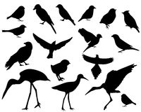 Set of silhouettes of birds Royalty Free Stock Photo