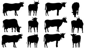 Set silhouettes of cows and bulls Royalty Free Stock Image