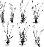 set silhouettes för gräs Arkivfoton