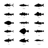 Set of silhouettes of fishes, vector illustration Royalty Free Stock Photos
