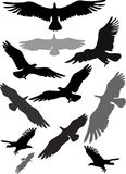 Set of silhouettes of flying eagles Royalty Free Stock Photo