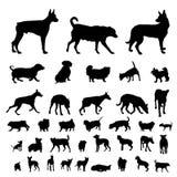 set silhouettes för hund Fotografering för Bildbyråer