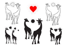Set of silhouettes of giraffes. Black on white background Royalty Free Stock Image