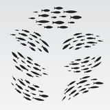 Set silhouettes of groups of sea fishes. Colony of small fish. Icon with river taxers. Royalty Free Stock Photos