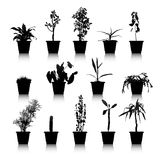 Set of silhouettes house plants Royalty Free Stock Images