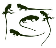 Set of silhouettes iguana Royalty Free Stock Photography