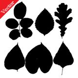 Set of silhouettes of leaves Royalty Free Stock Photos