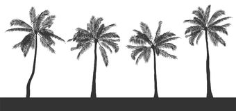 Set of silhouettes of palm trees on white isolated background. Hand drawn realistic contour. Template for printing and royalty free illustration