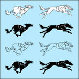 Set of silhouettes running dog saluki breed. Vector set of silhouettes running dog saluki breed, in dog racing or coursing dress Stock Images
