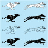Set of silhouettes running dog whippet breed. Vector set of silhouettes running dog whippet breed, in dog racing or coursing dress Stock Images