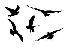 Set of silhouettes of seagulls. Black silhouettes of seagulls on a white background. Vector Royalty Free Stock Photography