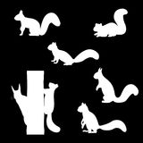 Set of silhouettes of squirrels. Stock Photo