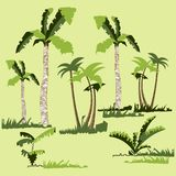 Rainforest jungle trees, plants, shrubs and bushes, crooked palm trees, grass. Trendy vector flat design. vector illustration