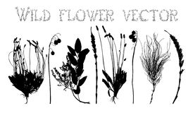 Set silhouettes of wild flowers vector Royalty Free Stock Photos