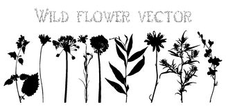 Set silhouettes of wild flowers vector Stock Photography