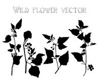 Set silhouettes of wild flowers vector Stock Image