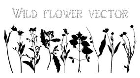 Set silhouettes of wild flowers vector Royalty Free Stock Image