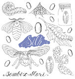 Set with silk worms and moth Stock Image