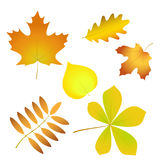 Set of simple autumn leaves with gradient fill, isolated   Royalty Free Stock Photography