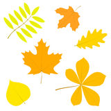 Set of simple autumn leaves, isolated on white background, in ve Royalty Free Stock Images