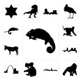 Set of chameleon, gorilla, maryland outline, in black, koala, missouri, , donkey, ninja, chameleon icons. Set Of 13 simple editable icons such as chameleon Stock Photos