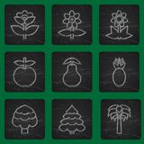 Set of simple flat icons flowers, trees and fruits. Trendy colorful design. Royalty Free Stock Images