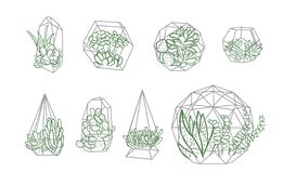 Set of simple geometric terrariums with plants. geometric terrariums with succulents & cactus. vector illustration