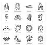 Set of Big Cellule, Human Brain, Mouth Open, Immune System, Neck, Hand Bones, Lips, Toe, Long Nail icons. Set Of 16 simple  icons such as Big Cellule, Human Royalty Free Stock Images