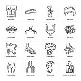 Set of Blood Supply System, Human Ear, Female Pubis, Brain, Tooth and Gums, Bladder, Mouth Open, Broken Bone, Men Chest icons. Set Of 16 simple  icons such as Royalty Free Stock Photo