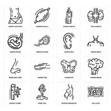 Set of Cellulite, Woman Pregnant, Blood Vessel, Human Hip, Nose Side View, Ear, Fetus, Finger, Abdomen icons. Set Of 16 simple  icons such as Cellulite, Woman Royalty Free Stock Photography