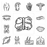 Set of Human Cerebellum, Men Back, Knee, Female Trunk, Muscle, Lips, DNA Sequence, Toe, Eyebrow icons. Set Of 13 simple  icons such as Human Cerebellum, Men Back Stock Photos