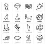 Set of Human Skull, Female Trunk, Fertilization, Body Side, Abdomen, Men Elbow, Woman Pregnant, Cellulite, Head icons. Set Of 16 simple  icons such as Human Royalty Free Stock Image