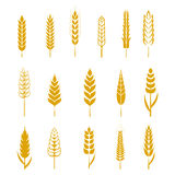 Set of simple wheat ears icons and design elements for beer Stock Image