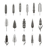 Set of simple wheat ears icons and design elements for beer. Organic local farm fresh food, bakery themed design, wheat grain. Wheat vector eps 10 Stock Image