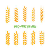 Set of simple wheats ears icons and wheat design elements for beer, organic wheats local farm fresh food, bakery themed. Wheat design, grain, beer elements Royalty Free Stock Photos