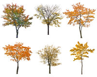 Set of six autumn trees isoalted on white Stock Photos