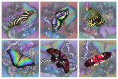 Set of six butterfly drinks coasters. 6 different multi-coloured collage style realistic butterfly drinks mats 100mm square plus 6mm bleed ready for print Royalty Free Stock Photo