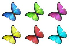 Set of six colorful butterfly  on white background Stock Images
