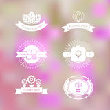 Set of six flower shop template labels Stock Photo
