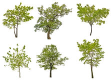 Set of six green summer trees isolated on white Stock Image