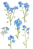 Set of six light blue forget-me-not branches Royalty Free Stock Image