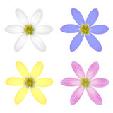 Set of Six Petal Flower Royalty Free Stock Photos