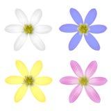Set of Six Petal Flower. Vector illustration royalty free illustration