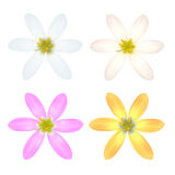 Set of Six Petal Flower Royalty Free Stock Photography