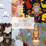 Set of six seamless patterns with birds. Cute owl seamless pattern. Cartoon style bird Stock Image
