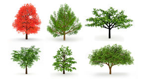 Set of six trees isolated on white Royalty Free Stock Images