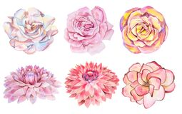 Set of six watercolor handmade flowers isolated on white background.